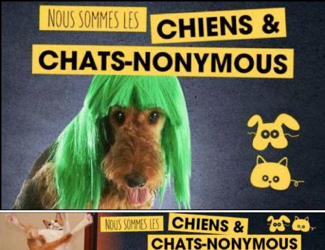 CHIENS&CHATS-NONYMOUS_APACOM